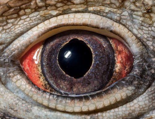 L'œil schizoïde